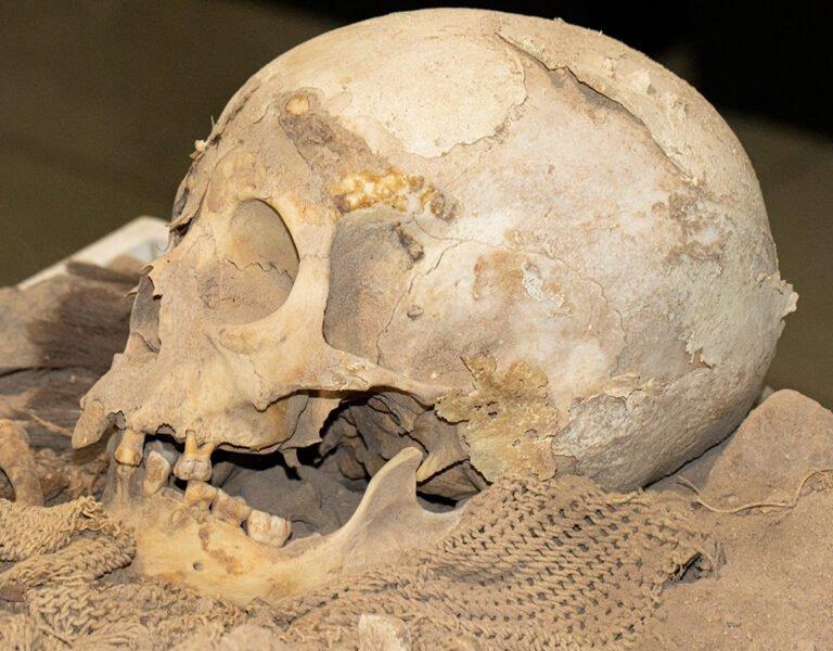 Acauã mummy's skull. Photo: Michael Marques