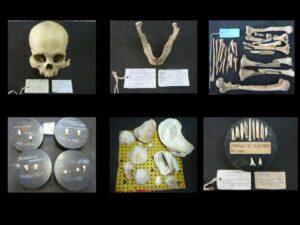 """Mostra dos Expositores originais usados em sala de aula na década de 1960 por Salles Cunha – dentes colados sobre tampas de """"caixas de requeijão"""" e restos de ósseo fauna sobre """"placa de Eucatex"""" - Acervo IAB 1970"""